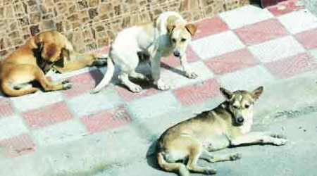 As MC failed to curb stray dog menace, it must compensate victims: Justice Garg