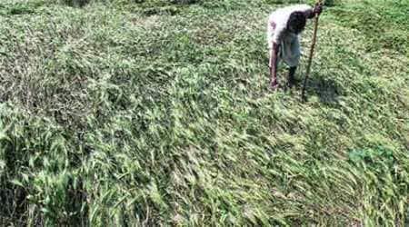 dalits, dalit in punjab, punjab dalits, subsidised land, subsidised rates for land, ZPSC, punjab news, indian express punjab