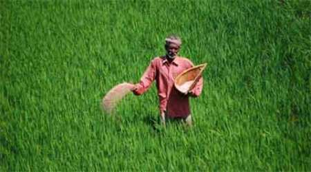 Waiting for his wheat harvest to be procured, farmer dies at MP mandi