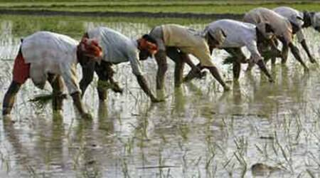 Agriculture Land Ceiling, gujarat land ceiling bill, gujarat land bill, gujarat news, ahmedabad news, india news