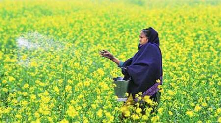 Punjab pesticide Scam: Different purity on same batch of pesticides
