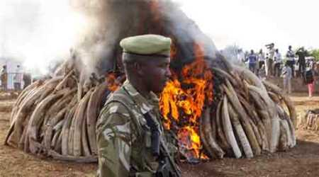 Video: Kenya destroys 15 tons of ivory taken from poachers