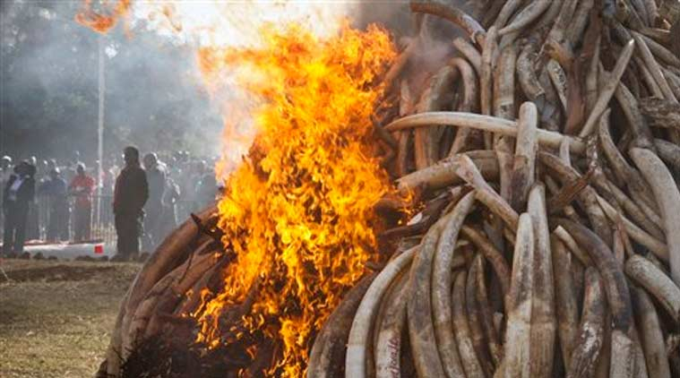 Ivory items, Ivory ban, International environment group, animal cruelty, animal products, animal poaching, latest news, world news
