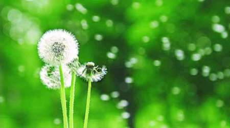 Blowin' in the Wind: Plants ensure their progeny travels far andwide