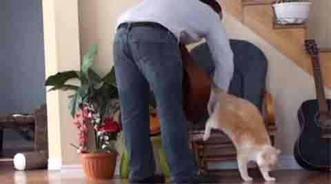 Cats, pets, domestic pets, cat pet, lazy animals, lazy cats, furry cats, cute cats, cat videos, hilarious pet videos, hilarious cat videos, funny pet videos, funny cat videos, funny animal videos, funny videos, viral videos, #viralvideo
