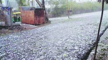 unseasonal rain, hailstorm standing crop damage, agriclture criss, standing crops , standing crop damage, ahmedabad news, city news, local news, ahmedabad newsline