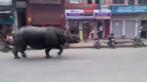 #viral, #viral news, #viral videos, viral videos, trending news, viral news, rhino viral video, rhino video, nepal rhino, nepal rhino video