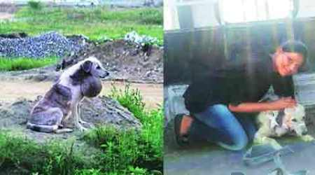 Stray dog relieved of 2-kg tumour but PFA had little to offer