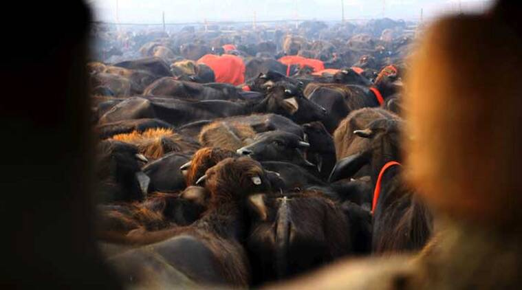 slaughter house sealed, meat plants sealed, up meat plants, meerut meat plants