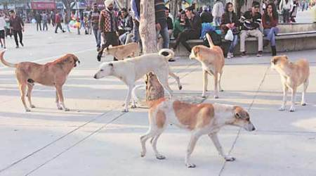 Dog died of rabies, confirms CRI; no need to panic, say officials