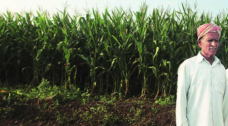 State sugar industry bleeds amid falling sugar prices
