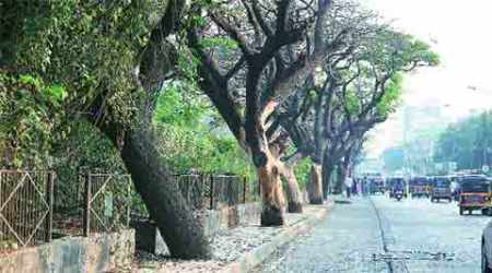 Told old trees release more carbon dioxide, bench seeks explanation