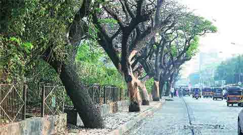 delhi green cover, delhi trees city trees, delhi govt, AAP, AAAP govt, kejriwal govt, RWA, delhi news, indian express