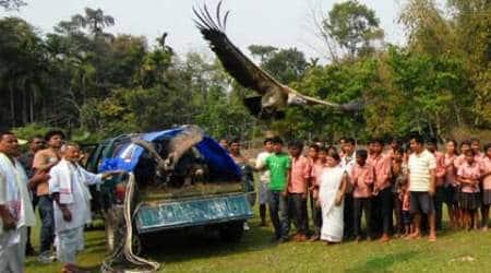 Nine endangered vultures rescued from poisoning releasedback