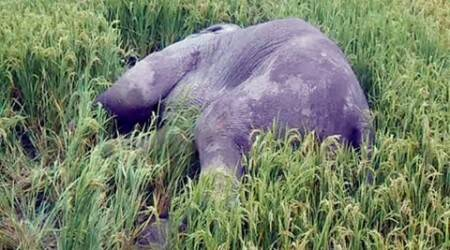 Jumbo Killed in Bangladesh: State wildlife wing report to Centre details tusker'sjourney