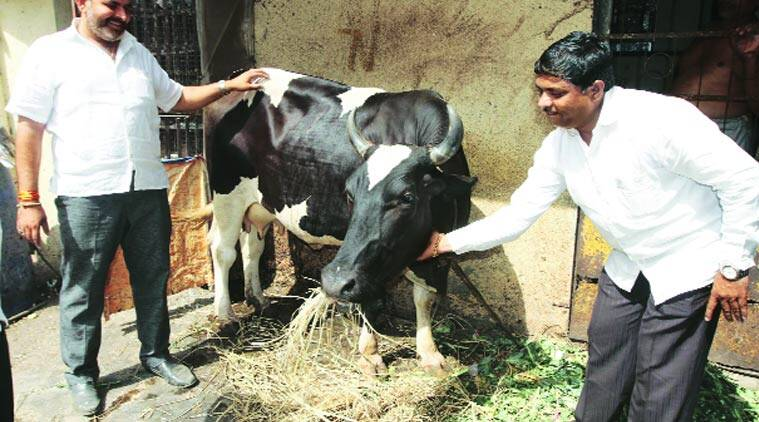 maharashtra beef ban, beef ban, cattle traders