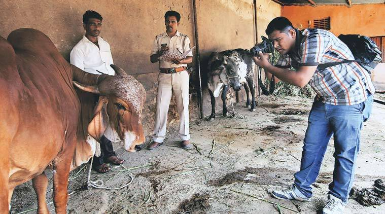 beef ban, anti-slaughter campaign