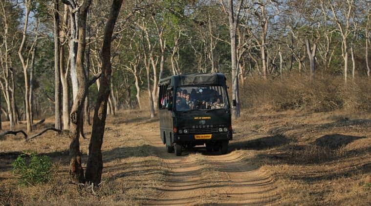 Day-2---Bandipur-Tiger-Rese