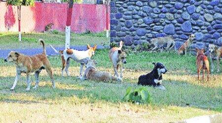 dogs_480