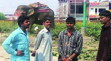 Day after, four-member committee formed to check elephants in district