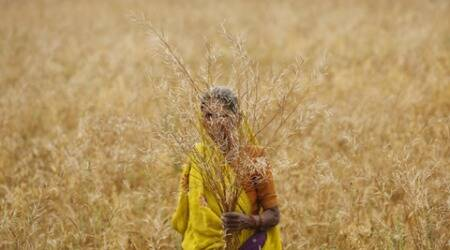 Government announces relief for farmers who lost crops