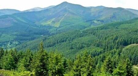 To curb smuggling of endangered timber, India to join globalalliance
