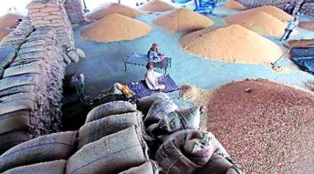 The Failing Fields: Wheat crop damaged, only seeds of discord at Punjab's mega mandi