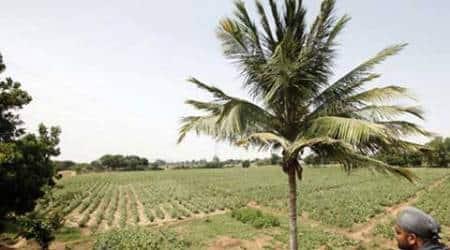 138 acres of shamlat land at Salempur sold, no action againstguilty