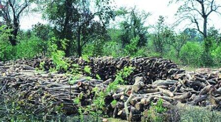 Conservationists irked as trees felled for NH-7widening