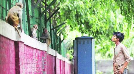 Notice to NDMC over electric fencing to keep away monkeys