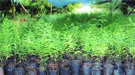 14 lakh saplings to be planted in green war against pollution