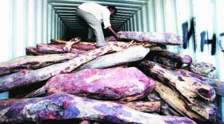Andhra digs 1,500-km trench to check red sanders smuggling