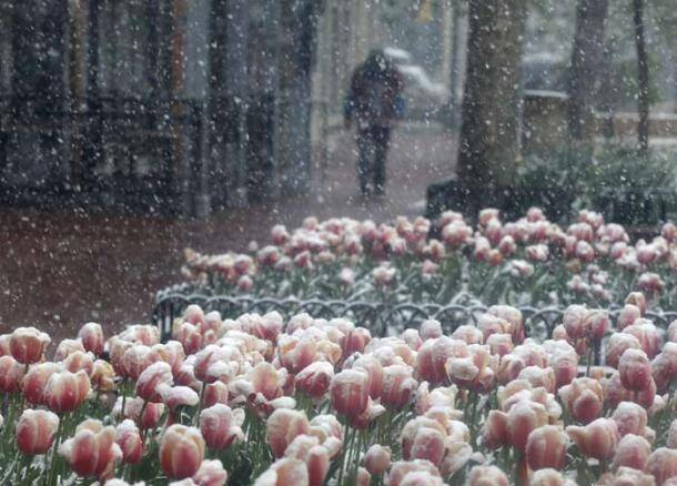 Colorado, Snow storm, Colorado snow storm, spring snow storm, snow storm colorado, colorado snow fall, snow fall colorado, colorado snow pics, Colorado spring storm photo, World News, international news,