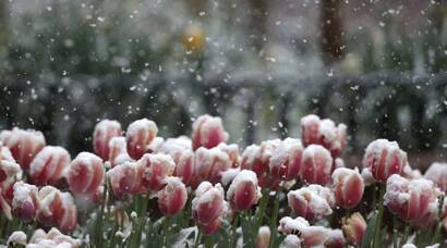 Snow in Spring, six photographs from Colorado you must see