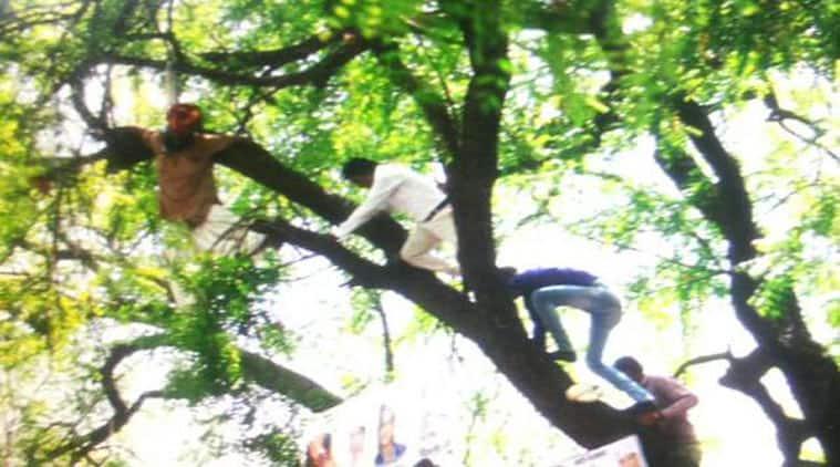 farmer suicide, farmer hangs himself, AAP rally, Arvind Kejriwal, Rajnath Singh, Rahul Gandhi
