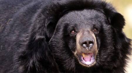 Man takes on rampaging bear, escapes unhurt