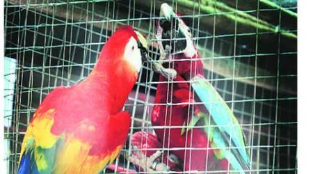 birds, birds right, High court, fundamental rights of birds animals, Prevention of Cruelty to Animal Act, Delhi Police, delhi news, city news, local news, Indian Express