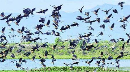 bird sanctury, Sultanpur National Park, migratory bird, avian species, delhi news, city news, local news, Indian Express