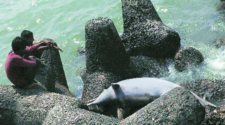 dophin, dolphin death, dolphins dying, goa institute, ongc, goa news, mumbai news, india news