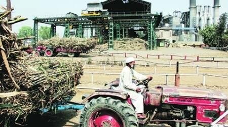 Sugarcane cultivation should be banned in Marathwada: Madhav Chitale