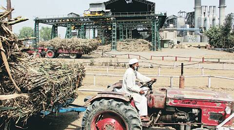 Sugarcane cultivation, sugarcane, madhav chitale, maharashtra news, mumbai rainfall, rainfall, marathawada, sugar mills, jaggery, mumbai news, city news, India news, nation news, national news, Indian Express