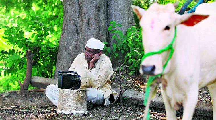 October 2014. A farmer in Sangli listens to Modi on radio.(Express Photo by: Prashant Nadkar) October 2014. A farmer in Sangli listens to Modi on radio.(Express Photo by: Prashant Nadkar)