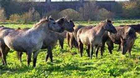 Lankan aircraft carrying horses from Pakistan leaves Pune
