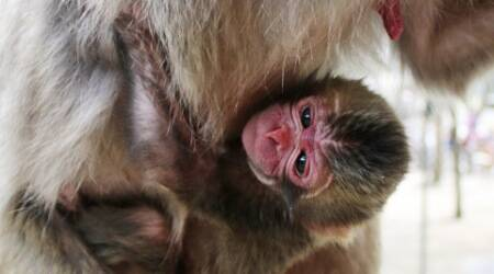 Japanese zoo names monkey after newborn British princess Charlotte, apologiseslater