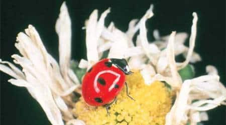 ladybug-thumb