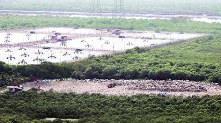 Mangrove cell on drive to removeencroachments