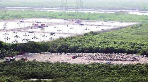 mumbai mangroved, mangroves cell, maharashtra forest department, encroachments, mumbai news, city news, local news, maharashtra news, airlines news, Indian Express