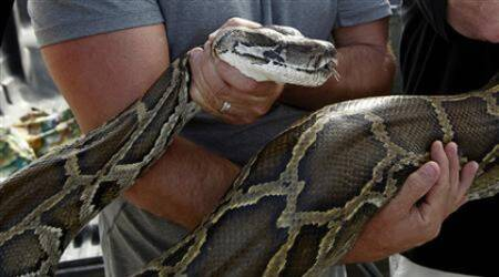 Chinese student held for trying to raise 9 pythons at home