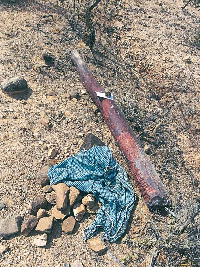 Red Sanders, Tirupati Red Sanders, Red Sanders killings, Tirupati killings, Tirupati Red Sanders killings, Andhra police, Seshachalam forest, India latest news