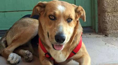 Arizona: Donations pour in for dog, who was found hanging from a tree